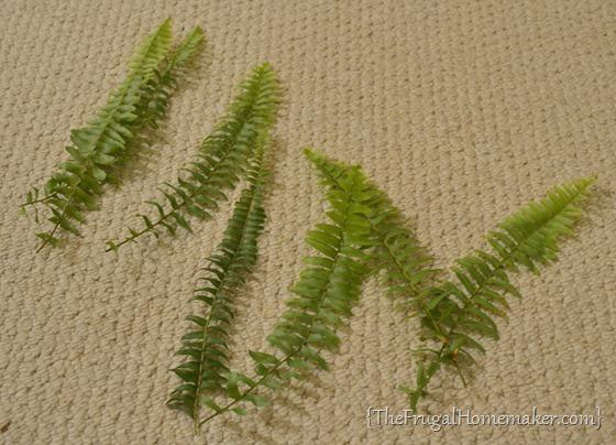 Framed ferns as art