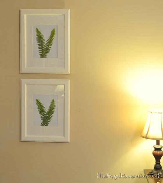 Framed ferns as art