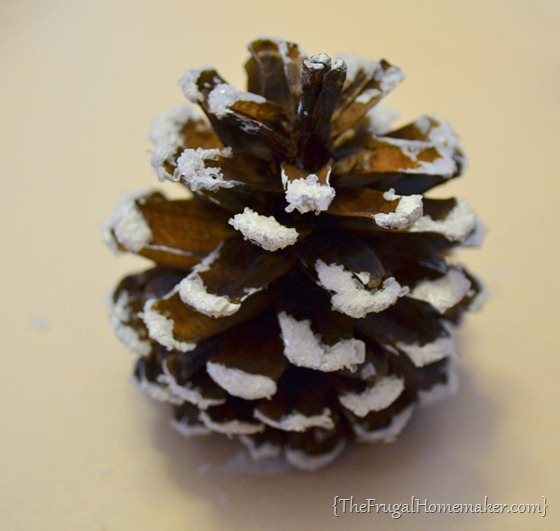snow covered pincones