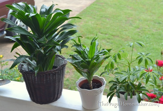 Taking care of your houseplants