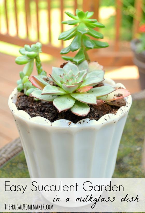 Easy Succulent Garden (in a milkglass dish)