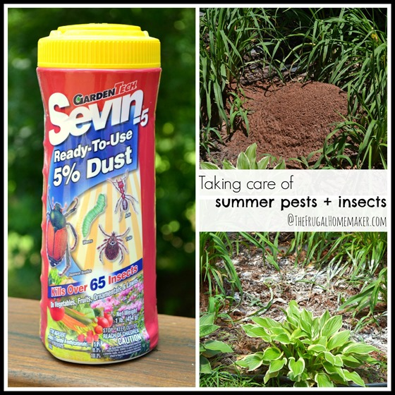 Taking care of summer pests + insects with Sevin dust