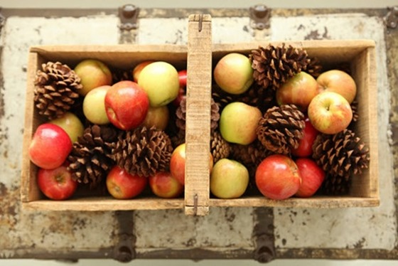 apples and pinecones