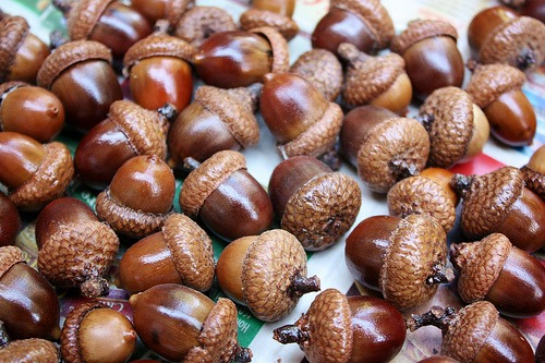 sealed acorns