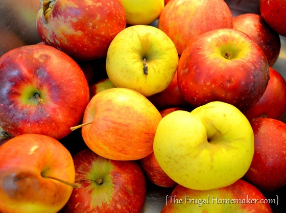 apples - 20 things I love about fall