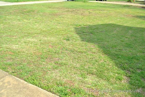 Ironite Plus Yard and Garden spray