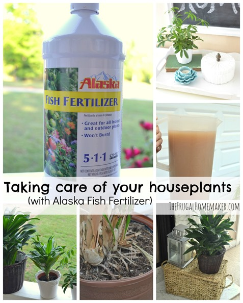 Taking care of your houseplants (+ enter to win a $25 gift card!)