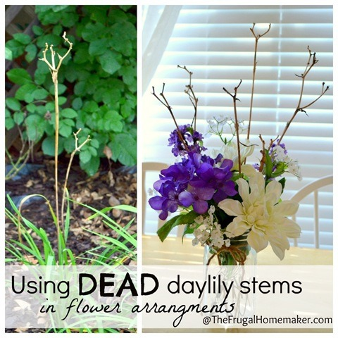 Using dried daylily stems as decor
