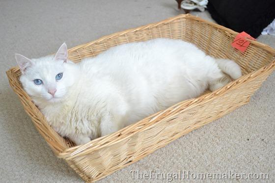 cat sleeping in a basket