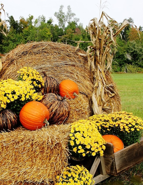 Fall_On_The_Farm