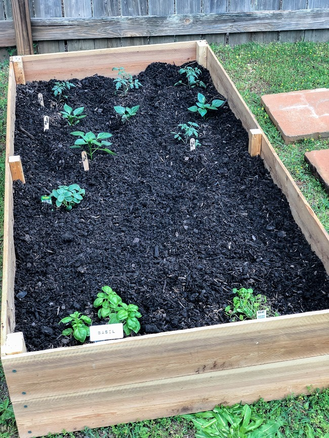 DIY Raised Garden Beds made with cedar fence pickets-11