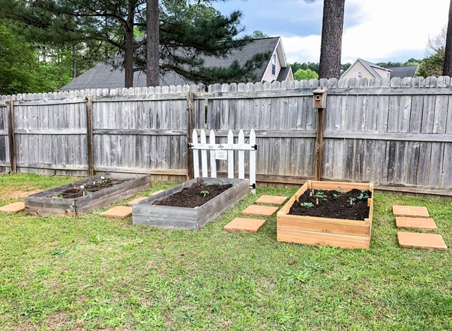DIY Raised Garden Beds made with cedar fence pickets-12
