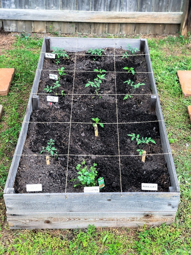 DIY Raised Garden Beds made with cedar fence pickets-14