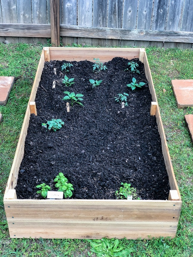 DIY Raised Garden Beds made with cedar fence pickets-16