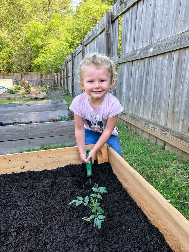 DIY Raised Garden Beds made with cedar fence pickets-7
