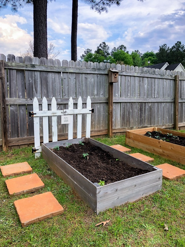 DIY Raised Garden Beds made with cedar fence pickets-9