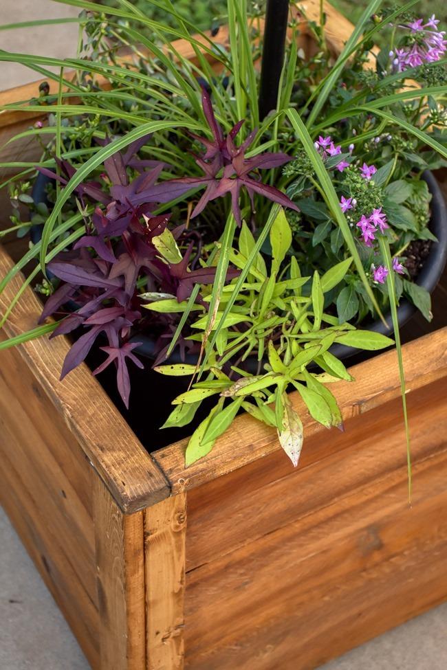 DIY Cedar Wood Planters-17